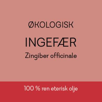 Duftapoteket-INGEFÆR- Zingiber officinale