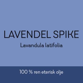 Duftapoteket-LAVENDEL SPIKE-Lavandula latifolia
